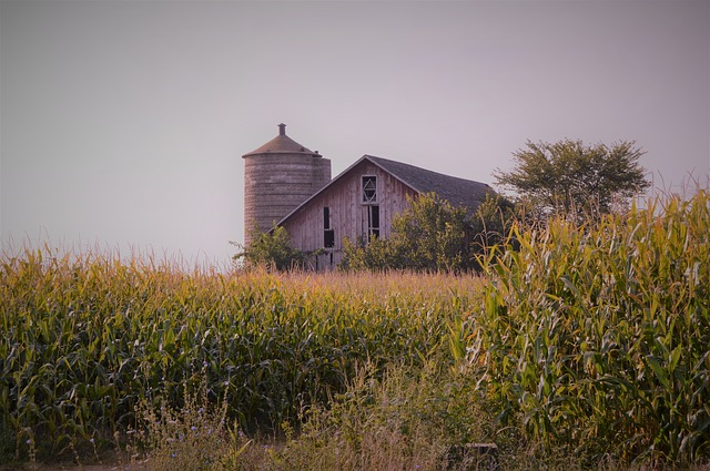 projekt budynku rolniczego